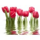 06-01-1-64-04-21-160-0 Комплект Тюльпаны 750х1000